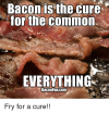 bacon-is-the-cure-for-the-common-everything-bacon-funcom-17937587.png